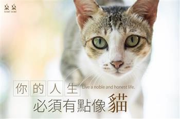 不要就是不要、才不管別人眼光:你的人生必須有點像貓